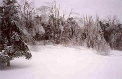 Ice Storm of 1998