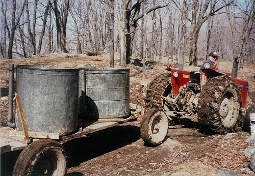 Hub gathering maple syrup in 1988