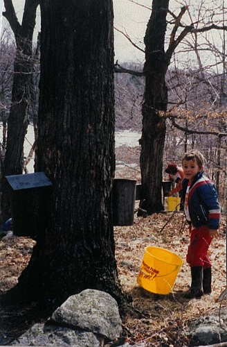 Jason gathering maple syrup in 1988